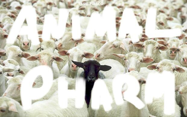 lupe-animal-pharm